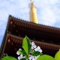 Photos: 五重塔を見上げると