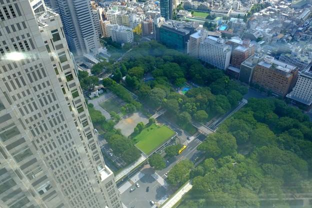 緑が多いのは中央公園かな?
