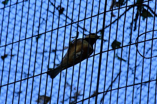 リスの小径にいる山雀