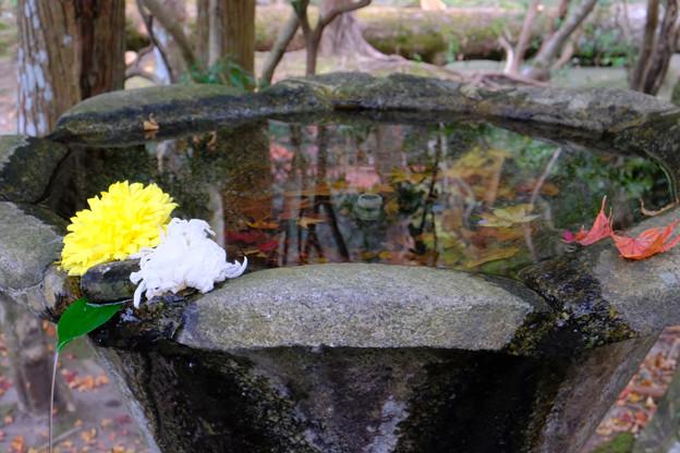 法然院花と水鏡