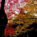 Photos: 7紅葉に彩られて