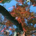 池映り幻想