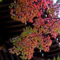 Photos: 鐘楼と紅葉