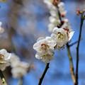 Photos: 雪月花