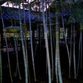 坪庭の竹林