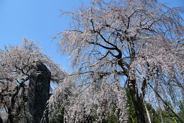 東郷寺石碑の近く