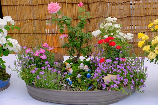 ミニバラ盆栽「白雪姫」