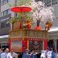 Photos: 山桜を仰ぎ見る黒主