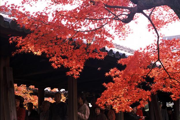 「そうだ京都行こう」を読んで/東福寺廻廊