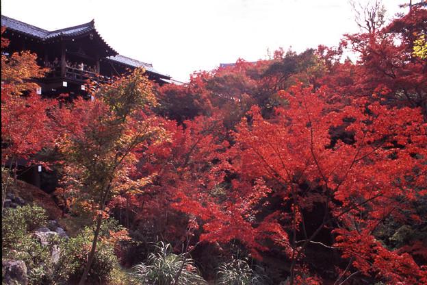 東福寺 通天橋を見上げる