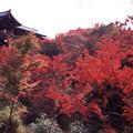 Photos: 東福寺 通天橋を見上げる