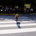 Photos: 赤信号を渡る雄鹿