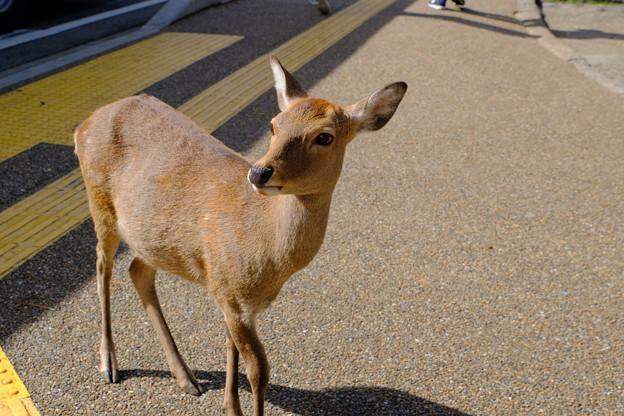 とにかく鹿がかわいい2