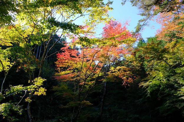 池の紅葉はこれから