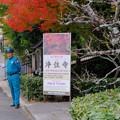 Photos: 浄住寺