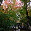 Photos: 地蔵院1
