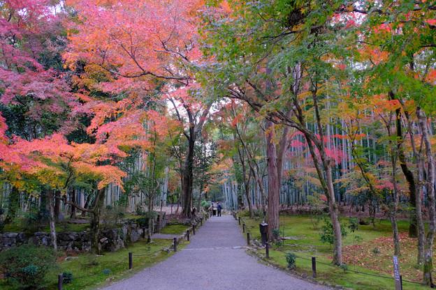 苔と紅葉と竹林と