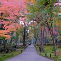 Photos: 苔と紅葉と竹林と