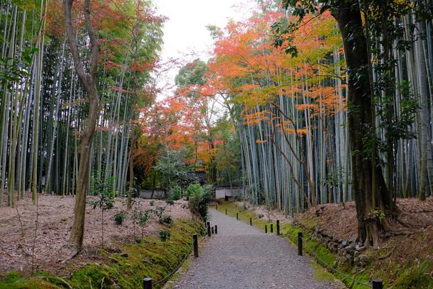Photos: 紅葉と竹林2