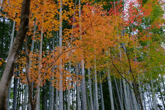 紅葉と竹林が良いお寺