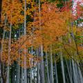 Photos: 紅葉と竹林が良いお寺