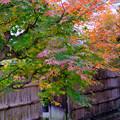 Photos: 地蔵院庭園へ入るところ