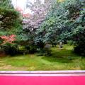 Photos: 十六羅漢の庭