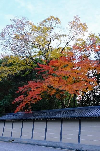 Photos: 御所の紅葉