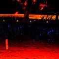 Photos: 青蓮院赤いライト