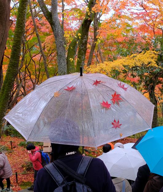 こんな傘発見