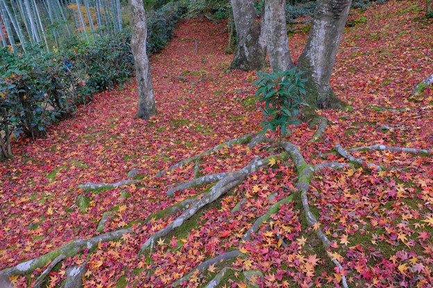 散り敷く紅葉