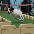 Photos: 初夢は犬?1