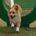Photos: 初夢は犬?2