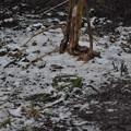 Photos: うっすらと雪