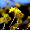 Photos: 黄色い小花
