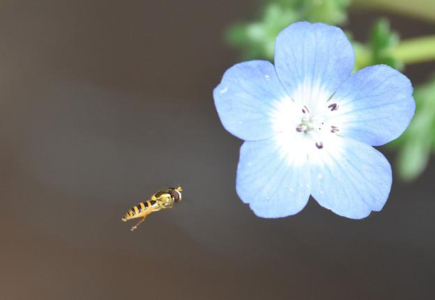 花へむかって