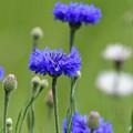 Photos: 青が好き