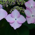 Photos: 庭の花2
