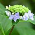 Photos: 庭の花3