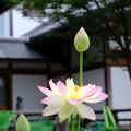 Photos: 花とつぼみ