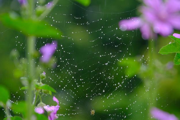 ちび蜘蛛の作るネックレス