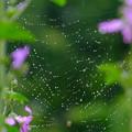 Photos: ちび蜘蛛の作るネックレス