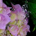 紫陽花飾り