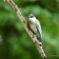 近い幼鳥2