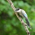 Photos: 近い幼鳥3