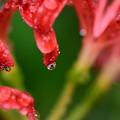 赤い花の中に