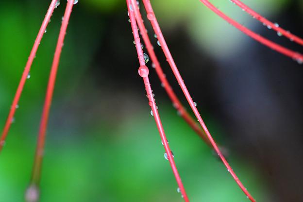 赤い花のしべに