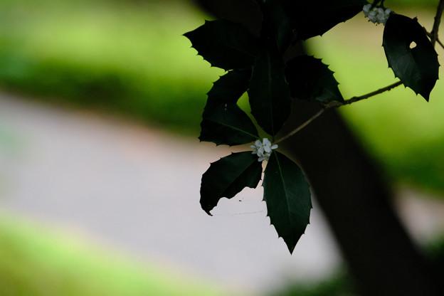 葉っぱはギザギザ
