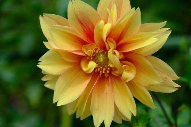 魅惑の黄色