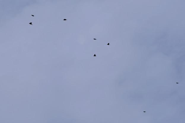 Photos: 鳥クイズ